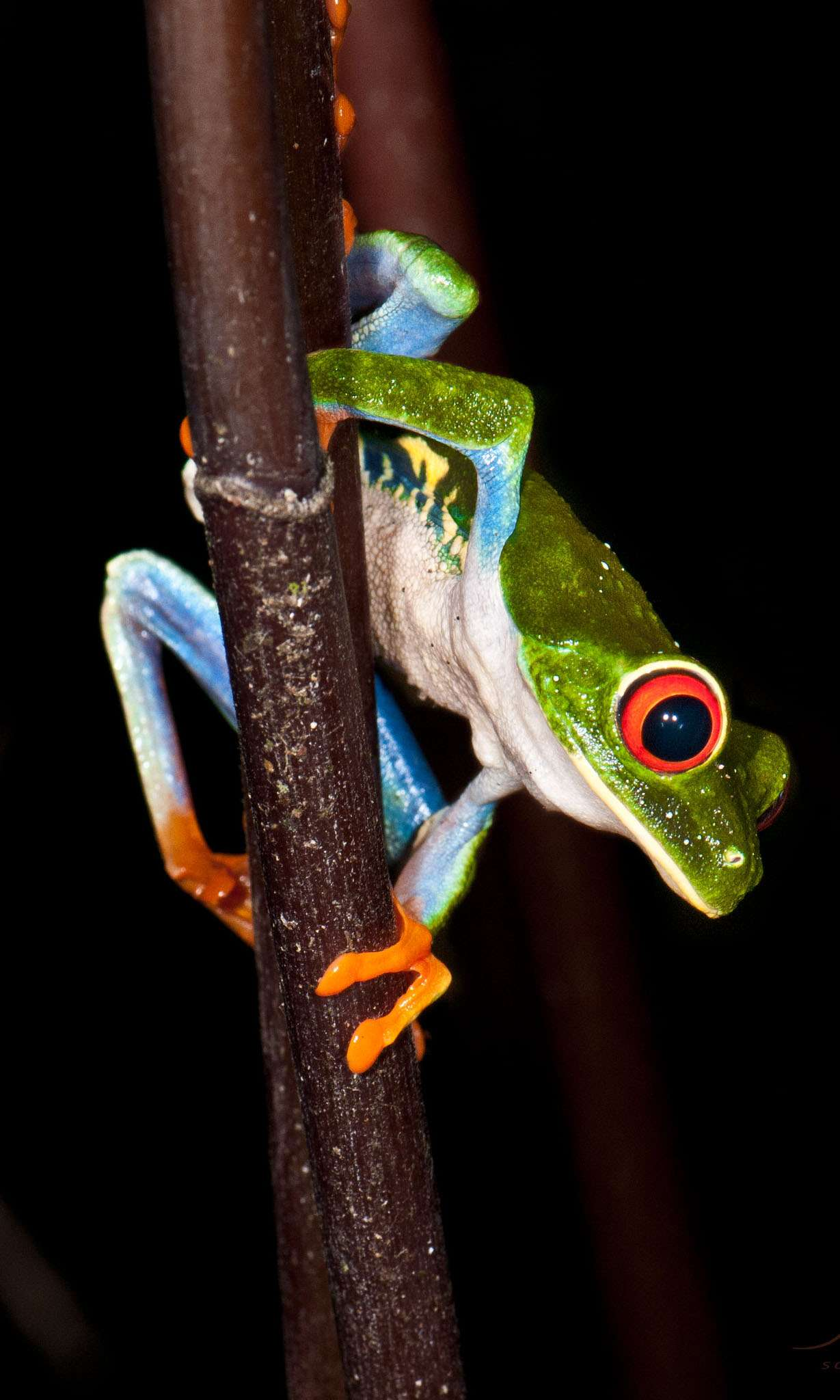 Who doesn't love these colorful tree frogs?!