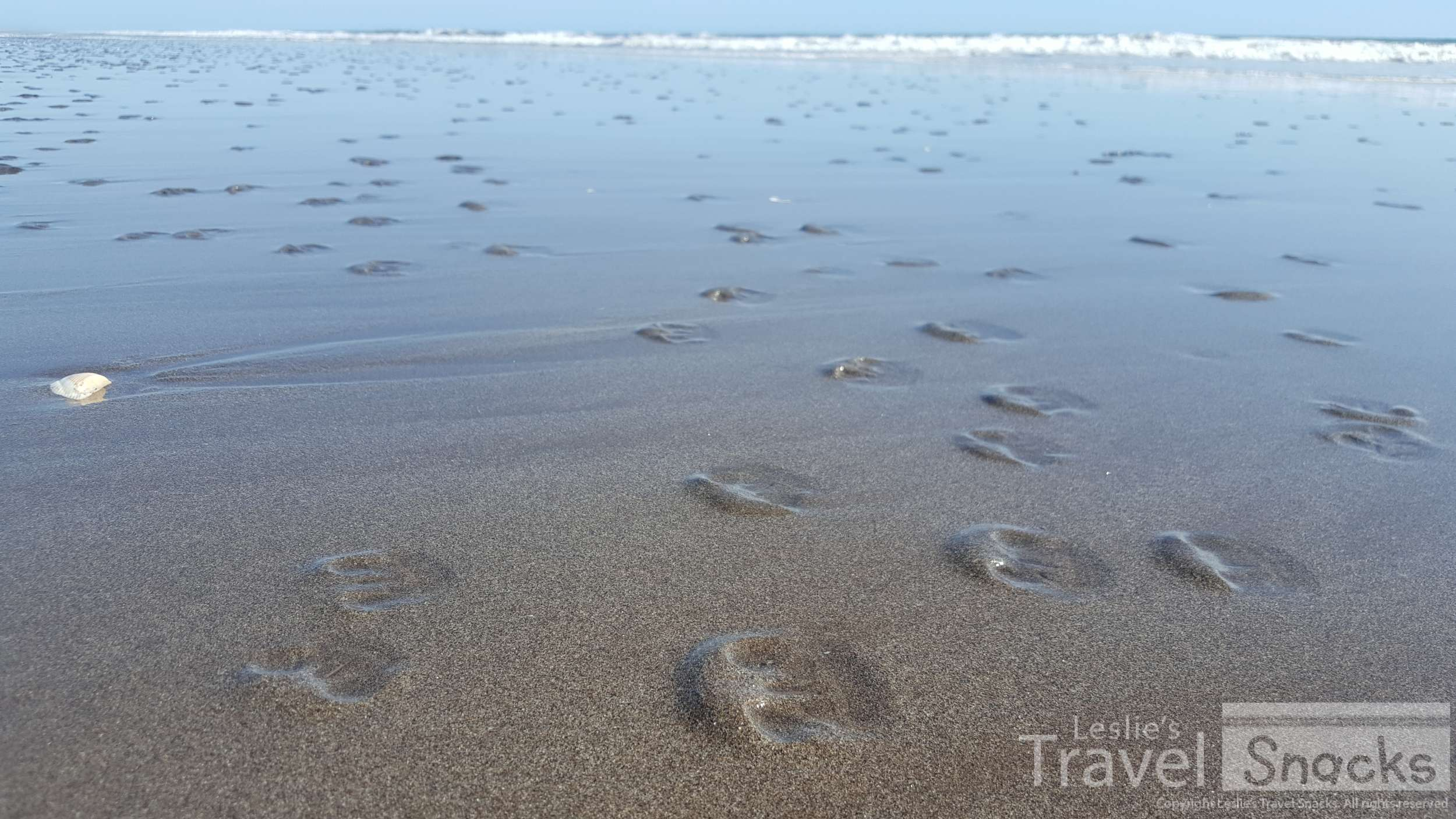 Wow, there were hundreds of live sand dollars on this beach in El Salvador!