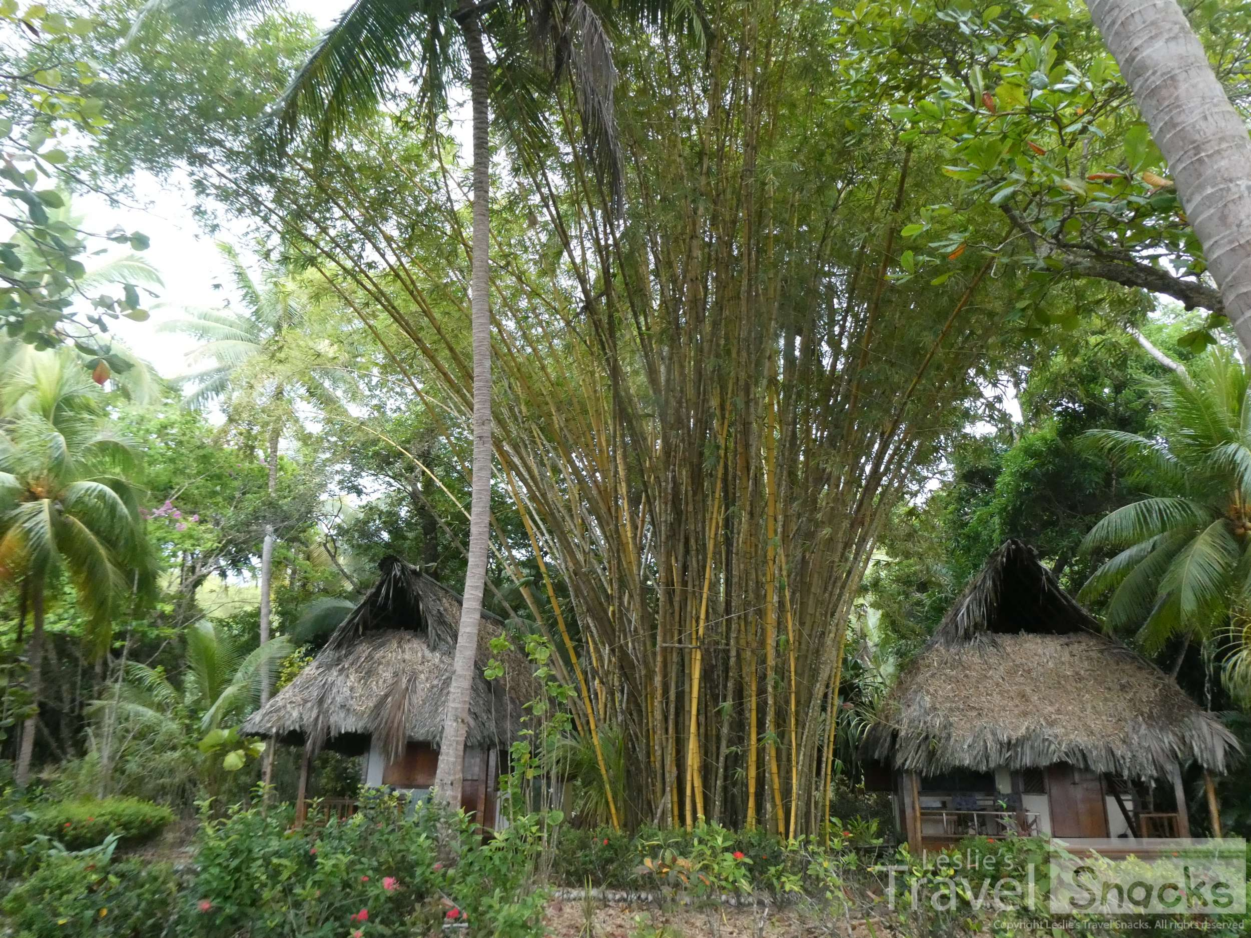 The two neighboring cabins to my right. Awesome huge bamboo.